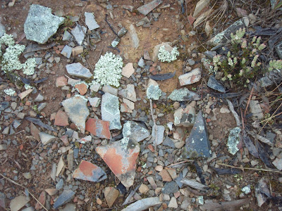 patch of ground with pretty coloured rocks