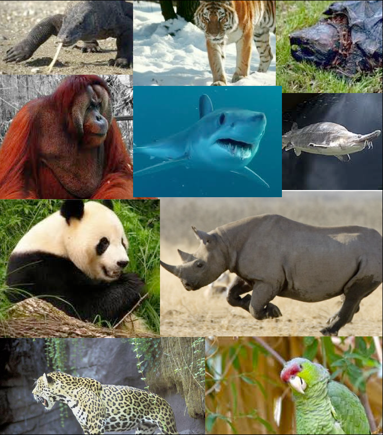 animal extinction among endangered species Causes of animal extinction biology essay  and drastically changing climates are among the prominent causes of animal  endangered species under their.