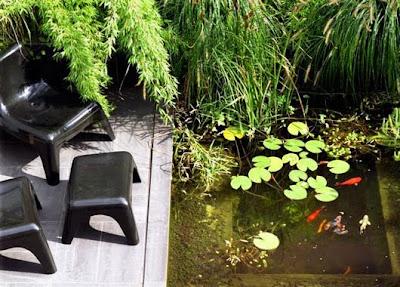 Laghetto con pesci rossi blossom zine blog for Pesci rossi laghetto