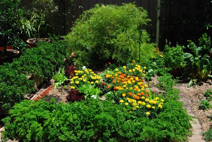 Image Result For How To Start A Garden Patch