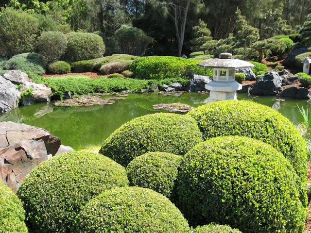 buxinho no jardim japonês