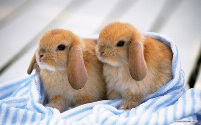 Cute Rabbit Seen On www.coolpicturegallery.us