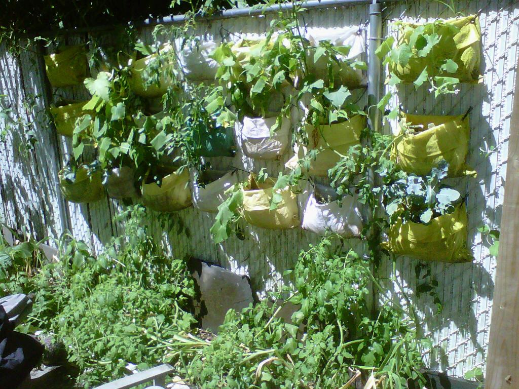 Commmunity gardening vertical gardening update - Vertical garden ...