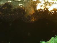 samal bat cave