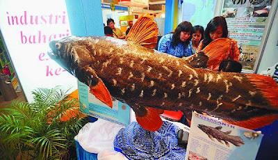 coelacanth LIPI Online