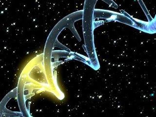 Molécula ADN