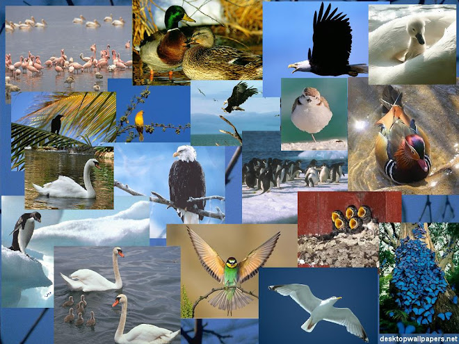 Pelbagai Jenis Burung