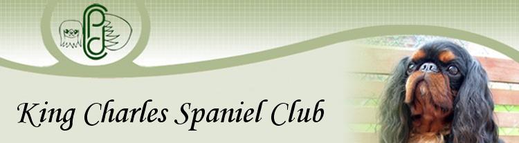 King Charles Spaniel
