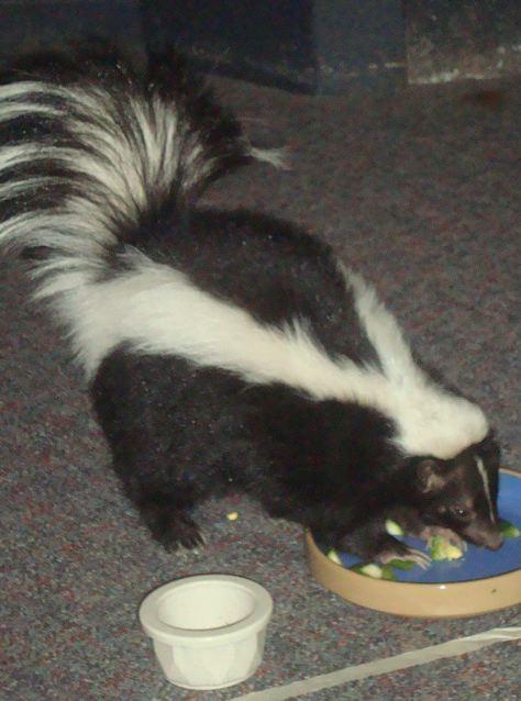 [skunk]