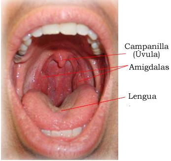 La osteocondrosis sheynogo del departamento los síntomas el tratamiento los pinchazos de la pastilla