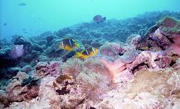 Lots of yellow fish