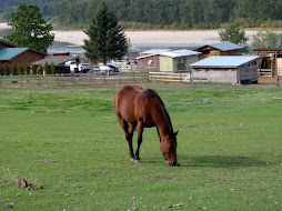 Our  former horse QuickStar