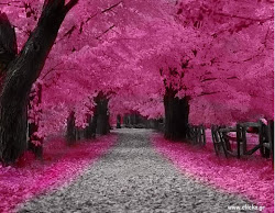 Stay in the steps and walk daily in your pink cloud...