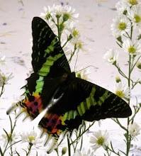 Perkasihan rama-rama dan bunga
