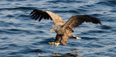sea eagle safari in norway