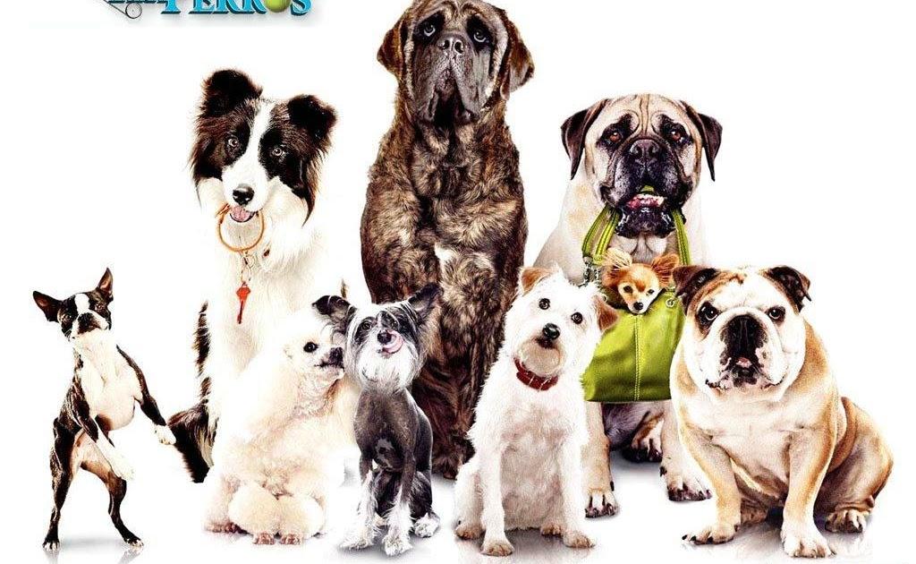 Nombres de perros y perras con la letra B - Diario Femenino