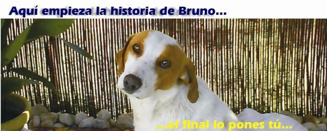 Aquí empieza la historia de Bruno...el final lo pones tú