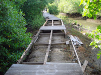 broken bridge in mangrove forest conservation center