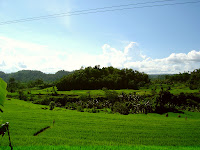 beautiful rice field view in sideman