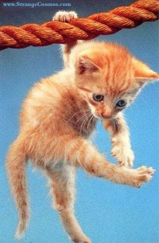 Hanging Hang in There Cat Free Download Wallpaper