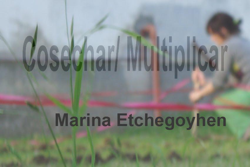 """Proyecto: """"Cosechar/ Multiplicar"""""""