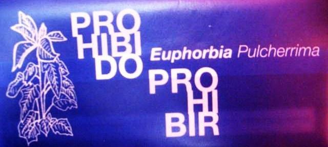 Euphorbia Pulcherrima * Libro- Art *
