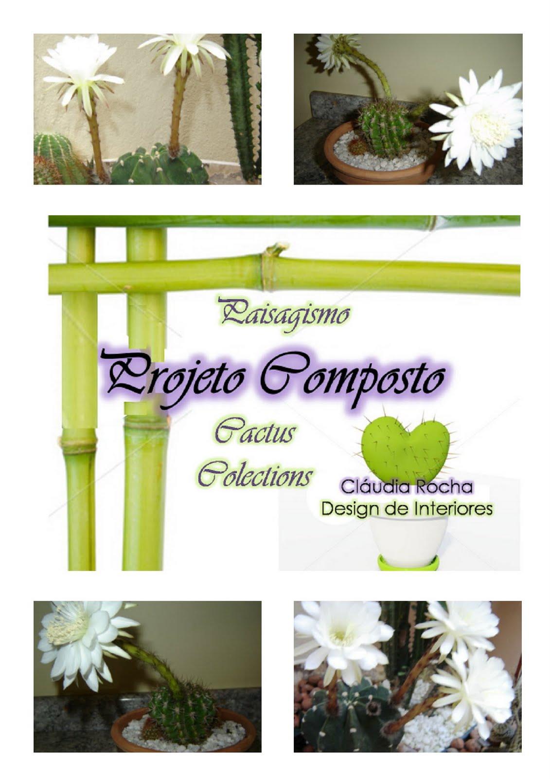 flores jardim camburi: de cactos cactos de flores brancas cacto de flor amarela cacto de flor