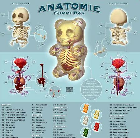 Anatomía Azucarada