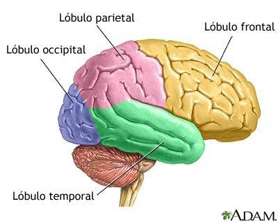Ciencialandia: Sistema Nervioso Central
