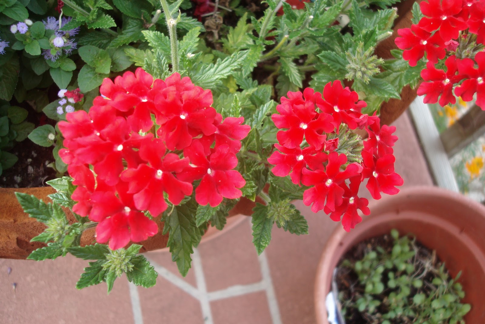 Flowers and Nature in my Garden: Potted Flowers