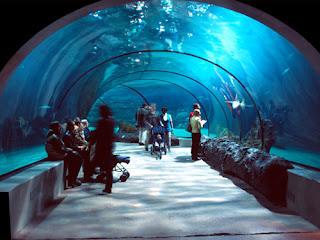 Aquarium Date | Flickr - Photo Sharing!
