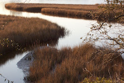 Mississippi Marshlands
