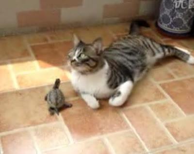 烏龜惹貓 - 烏龜惹貓 只為一親芳澤