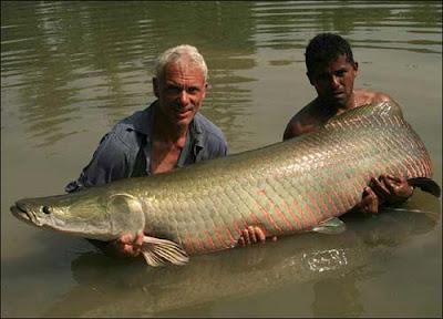 巨型魚怪 - 巨骨舌魚 (Arapaima)