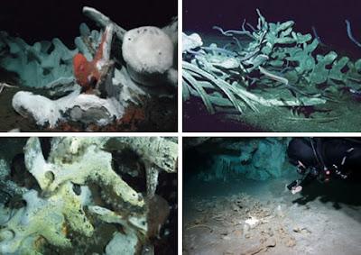 世界11大海底墳墓(二) 海底鯨魚埋骨地
