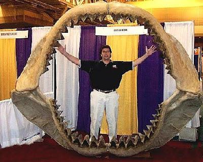 史上最大鯊魚 體長為大白鯊兩倍