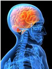 image of brain/cord
