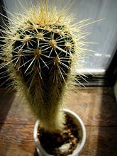 My office cactus