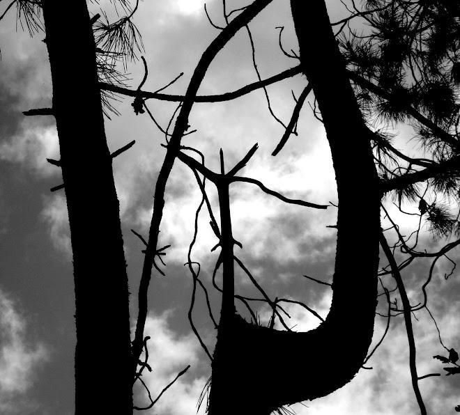lenin's tree