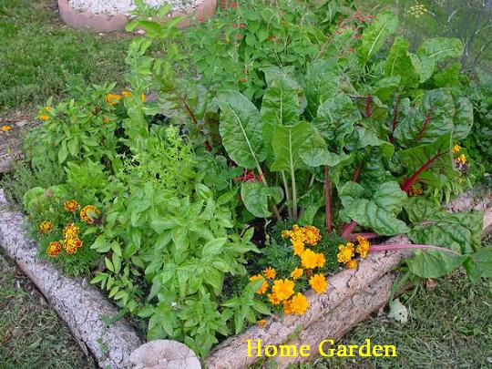 Home Garden Designhome Garden Home Vegetable Garden Plans - Home-vegetable-garden-design