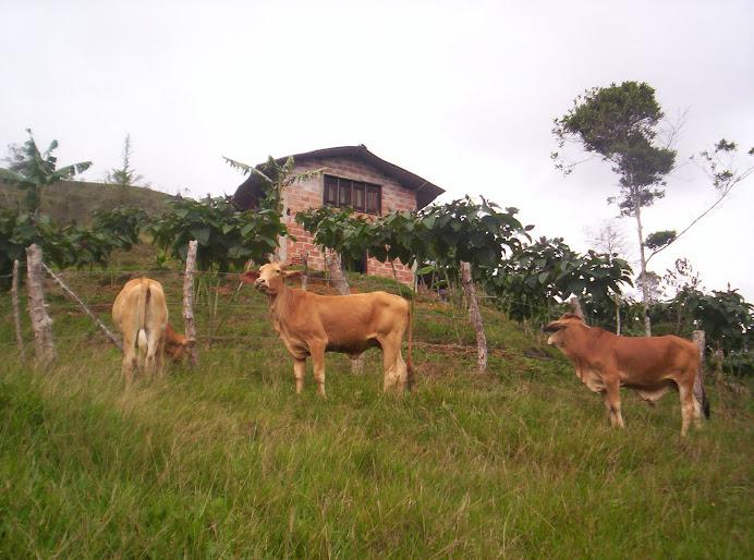 Rancho Aldhor