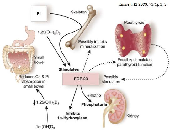 Nephrology World