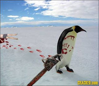 Insane penguins Angry+Penguin