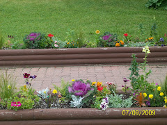 Flowers in Dawson Creek at Visitor's Center