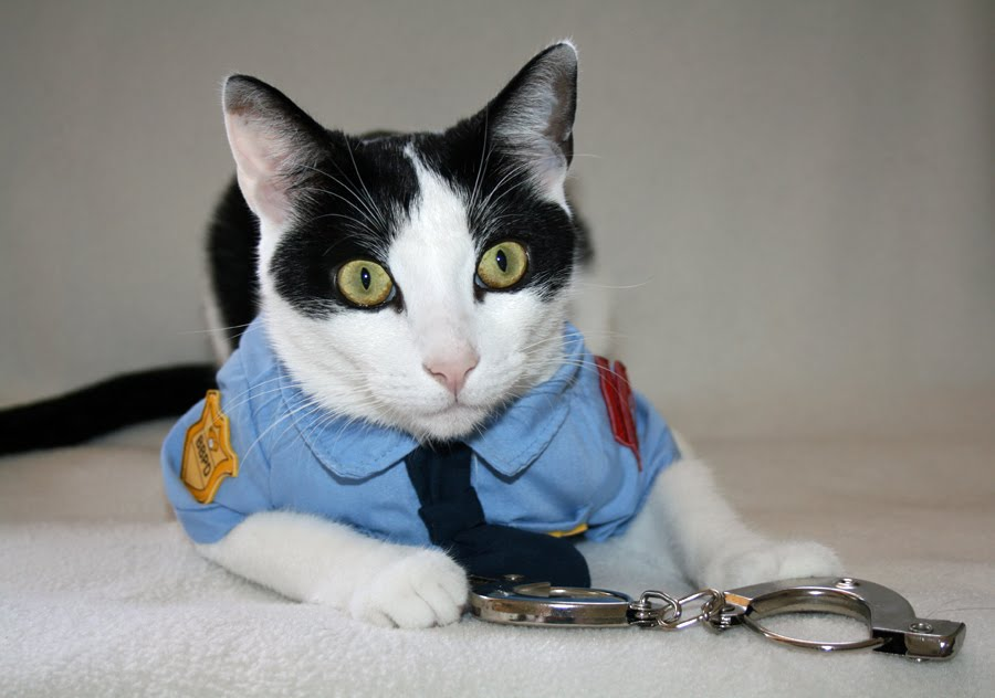 Daisy The Curly Cat A Mancat In Uniform