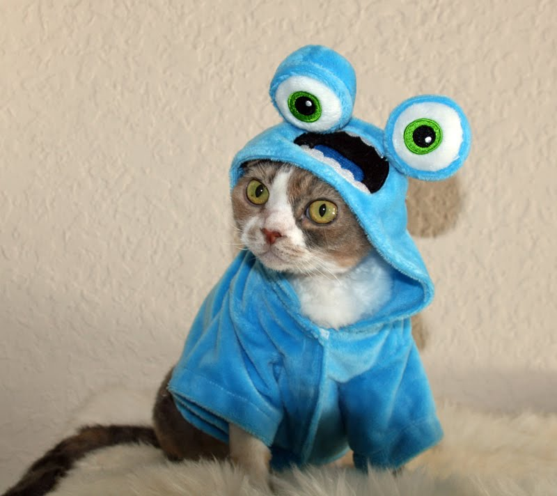 & Daisy the Curly Cat: Cookie Monster!