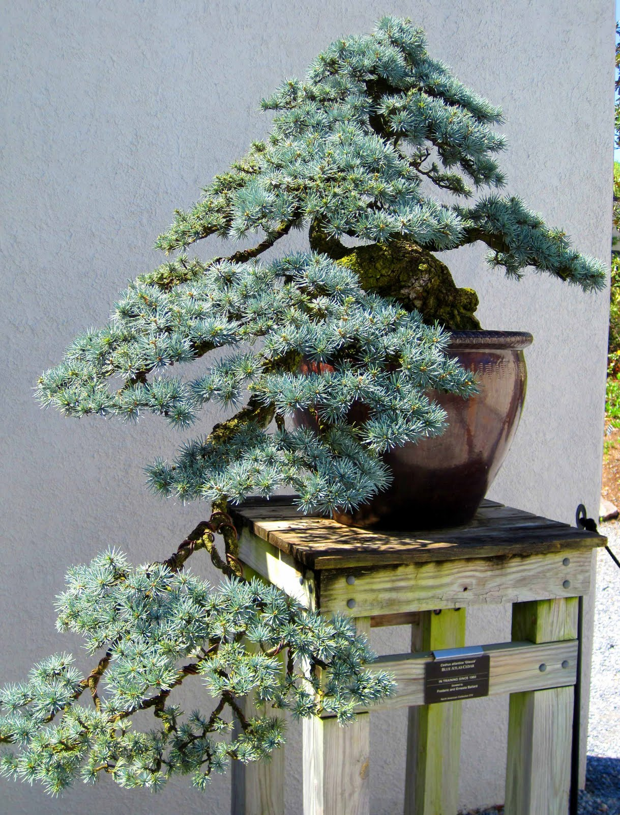 Of All Design Bonsai Garden