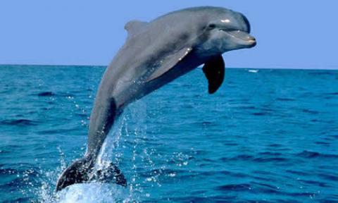 Animales Acuaticos*