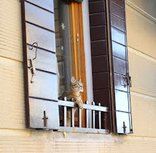 cat in Venice window