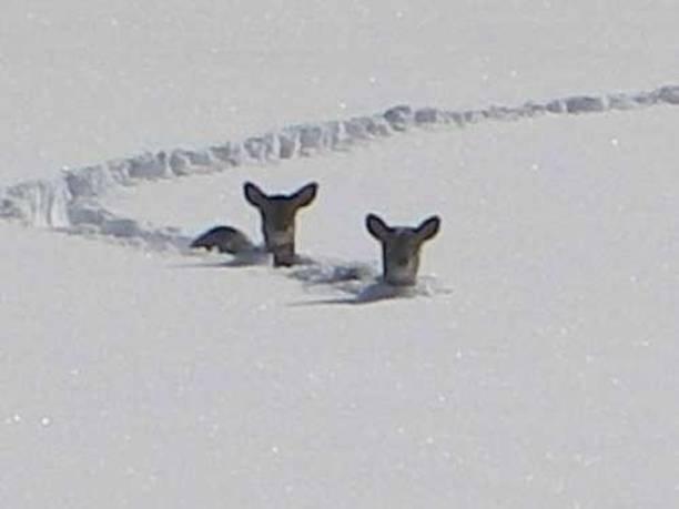 [2+deer.aspx]